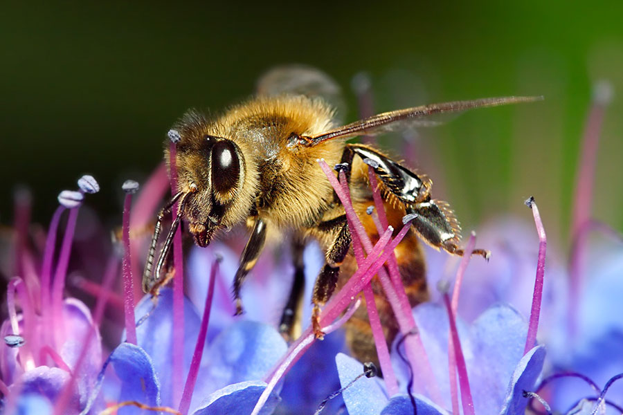 Kids Can Help Save the Honey Bees - North State Parent magazine